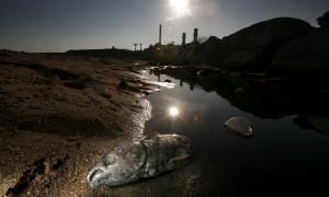 Un pez muerto en el cauce del rio Besos a su paso por la incineradora de Sant Adria del Besos, Barcelona.