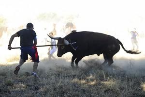 David Rodríguez Mata, de 33 años asesta una lanza mortal a Vulcano durante el transcurso del Torneo del Toro de la Vega 2013, en Tordesillas. Pinchando sobre la foto se accede a la galeria con las imágenes del torneo y el encierro previo.