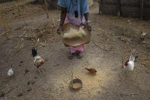 ARROZALES E HISTORIA DE MUJER Guinea Bissau. 24 enero 2014. © Pedro ARMESTRE.